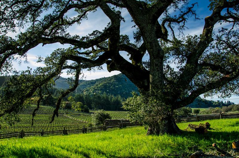 Jack London Ranch State Park, California