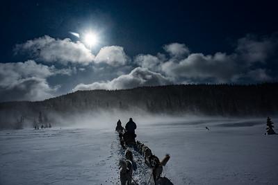 Dog sledding, Åre, Sweden