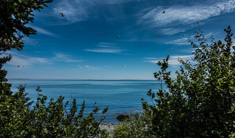 Bird Sanctuary, Grand Manan, New Brunswick, Canada