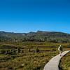 Cradle Mountain path, Tasmania, Australia
