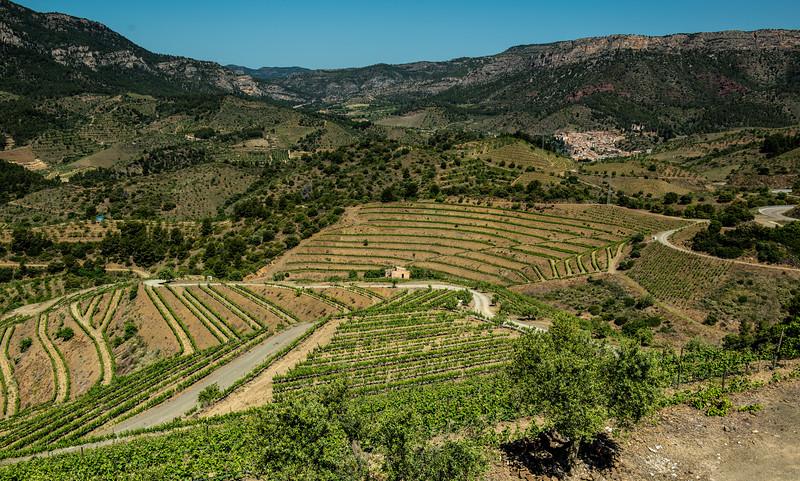 Vineyards, Priorat, Spain