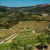 Vineyards, Priorat, Spain