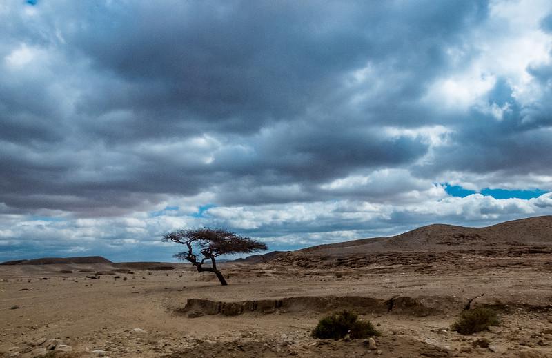 Lone Tree, Sinai, Egypt