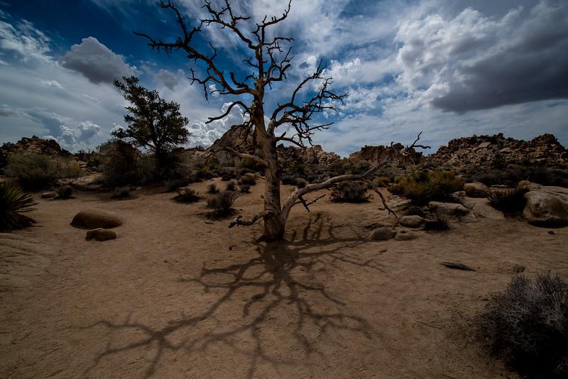 Hidden Canyon, Joshua Tree National Park, California