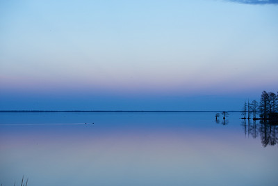 Lake Mattamuskeet 478