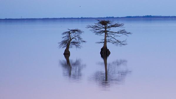 Lake Mattamuskeet 464