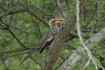 Bird, Thula Thula Royal Zulu Game Reserve, Kwa-Zulu Natal, South Africa.