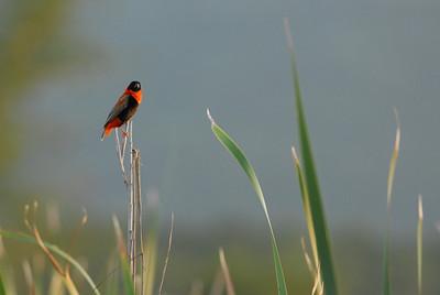 You talkin' to ME? Mkuze Falls private game reserve, Kwa-Zulu Natal, South Africa.