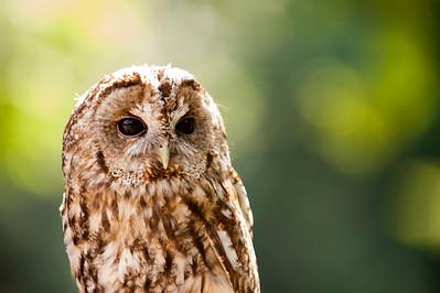 Owl, Tierpark Hellabrunn, Munich, Germany.