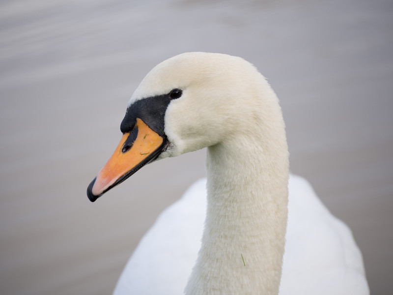 Two Swans; Her