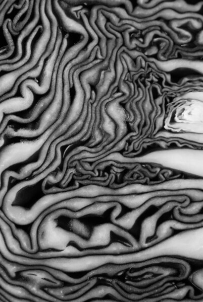 Abstract cabbage