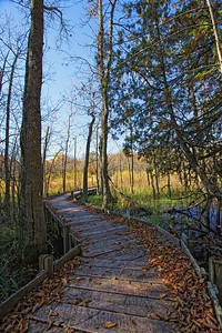 Wetland Boardwalk 2