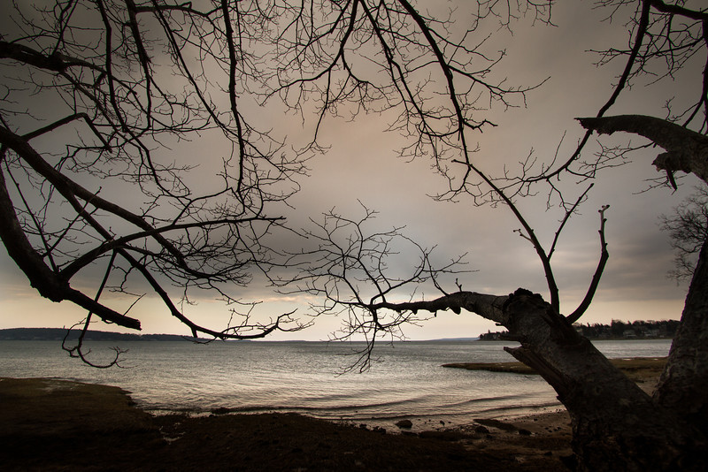 © 2013  Myrna Walsh - Shore and Trees