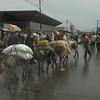 Beasts of Burden, Addis Ababa, Ethiopia.