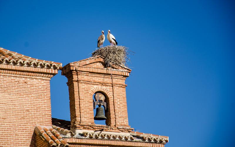 Cranes, Alcala de Henares, Spain