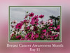 Breast Cancer Awareness Month, Day 11