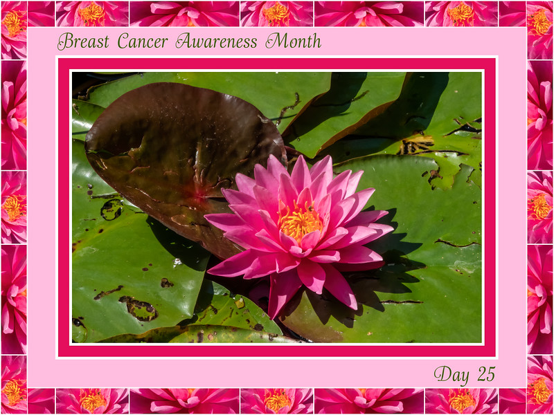 Breast Cancer Awareness Month, Day 25
