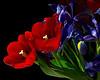Bouquet - tulips and irises