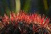 Red and Green Natural Scene - Cactus Spines - IN10454