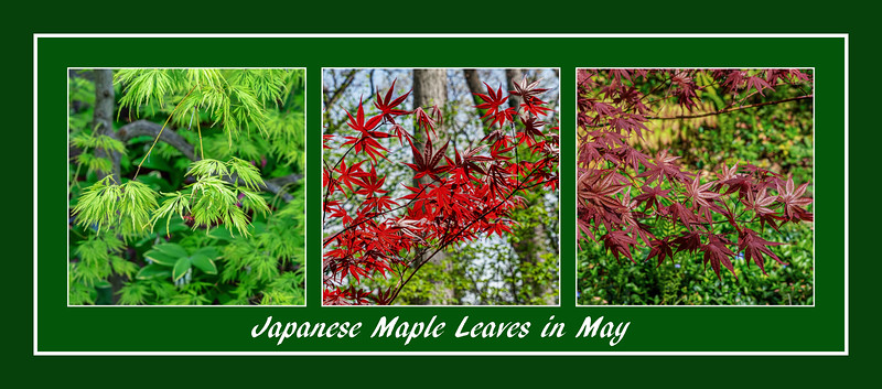 Green, Red, Red on Green - Christmas colors in May