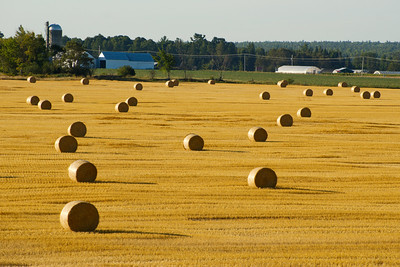 KennedyYear2008;Gold;Agriculture