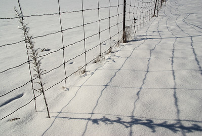 Shadow;Agriculture;Winter;Fence
