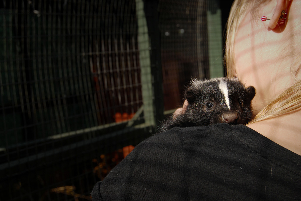 Girl With a Skunk