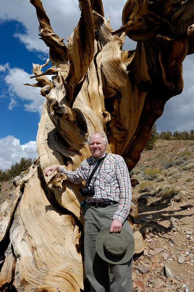 "I first learned about the long lives of bristlecone pines before embarking on a trip to Egypt back in the sixties. Some of these amazing trees were saplings when the ruins I saw in Egypt were constructed. Remember the new ""wonders of the world"" list that was voted on not to long ago. How come these trees are not the list?"