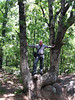 Me in a forked tree on the Elephant Rocks trail.