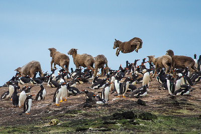 West Falklands 2018