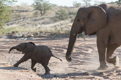 Twyfelfontein, Namibia 2015