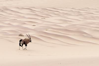 Skeleton Desert, Namibia 2015