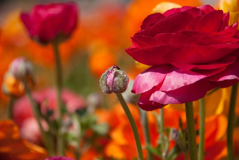 FlowerFields-3123