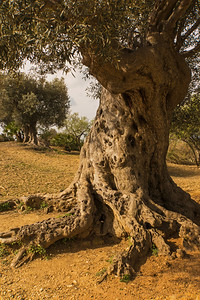 Valle dei Templi near Agrigento