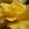 FlowerFields-3214