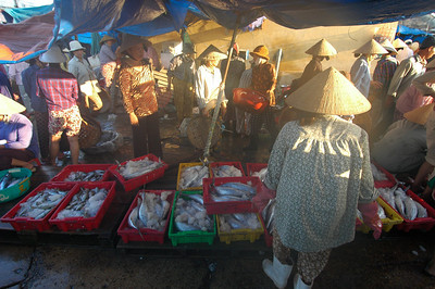 Dawn fish market, Hoi An, Vietnam.