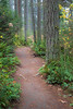 Woodinville, Paradise Valley - Trail winding past a tall tree surrounded by green