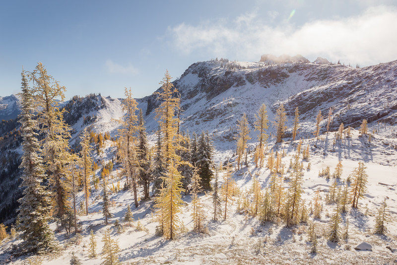 Rainy Pass. Maple Pass - Small stand of larch beneath Maple Pass in the snow