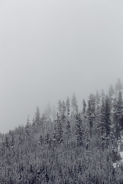 Snoqualmie Pass, Gold Creek Pond - Telephoto view of old growth forest in snow, empty space above