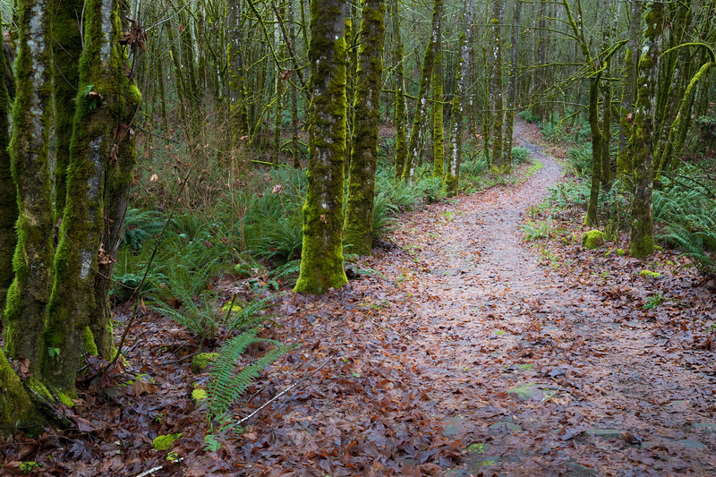 Snohomish, Lord Hill - Path leading through a flat with many bare trees