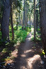 Rainy Pass, Cutthroat Pass - Trail leading to bright spot in the forest