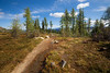 Harts Pass, Windy Pass - Water flowing off of the Pacific Crest Trail under bright sunshine