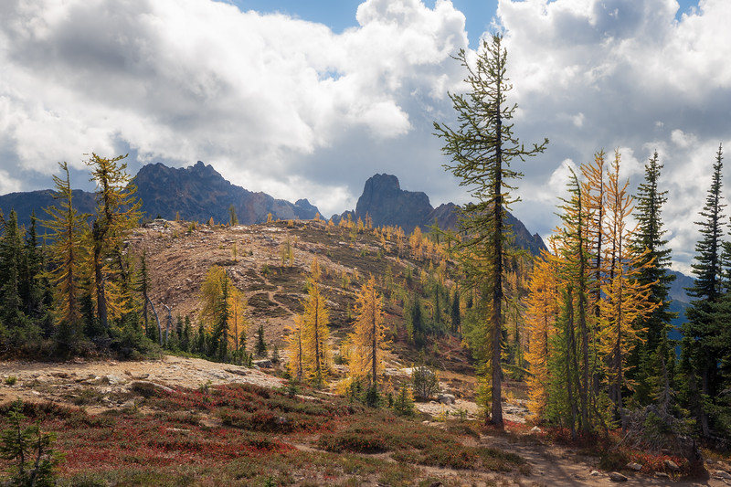 Rainy Pass, Cutthroat Pass - Small grove of larch trees just above Cutthroat Pass