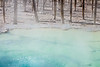 Yellowstone, Landscape - Blue thermal pool with dead trees