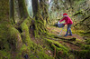 Hoh, Rainforest - Man with ironing board and santa hat ironing next to moss covered old growth timer