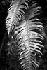 Lynnwood, Meadowdale Beach - Bright ferns, black and white