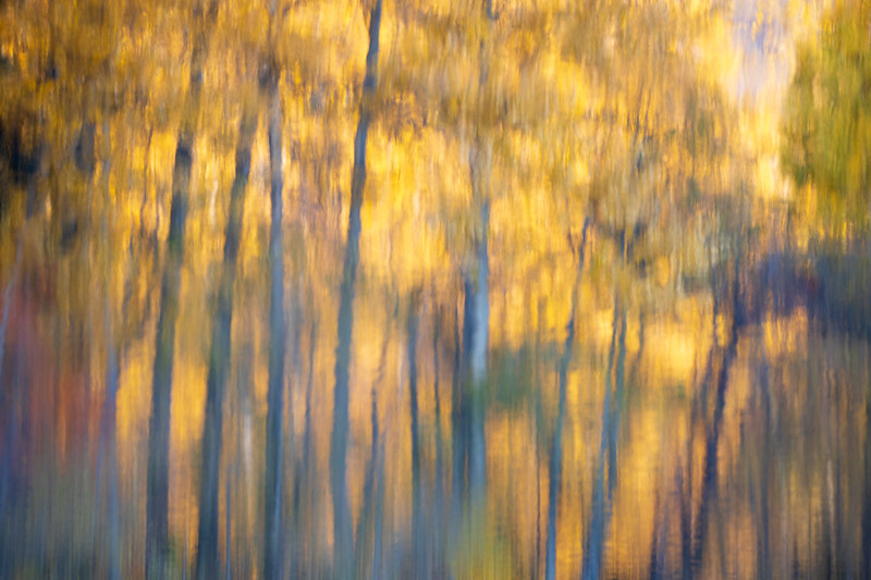 Easton, Pond - Inverted reflection of tall trees and color in lake