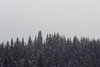 Snoqualmie Pass, Gold Creek Pond - A row of evergreen trees in a snowstorm with empty sky above