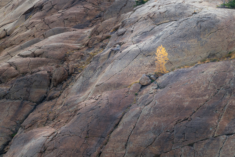 Stuart, Ingalls - Two small larch trees on the edge of a cliff
