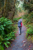 Hoh, Rainforest - Hiker with backpack walking up a small hill